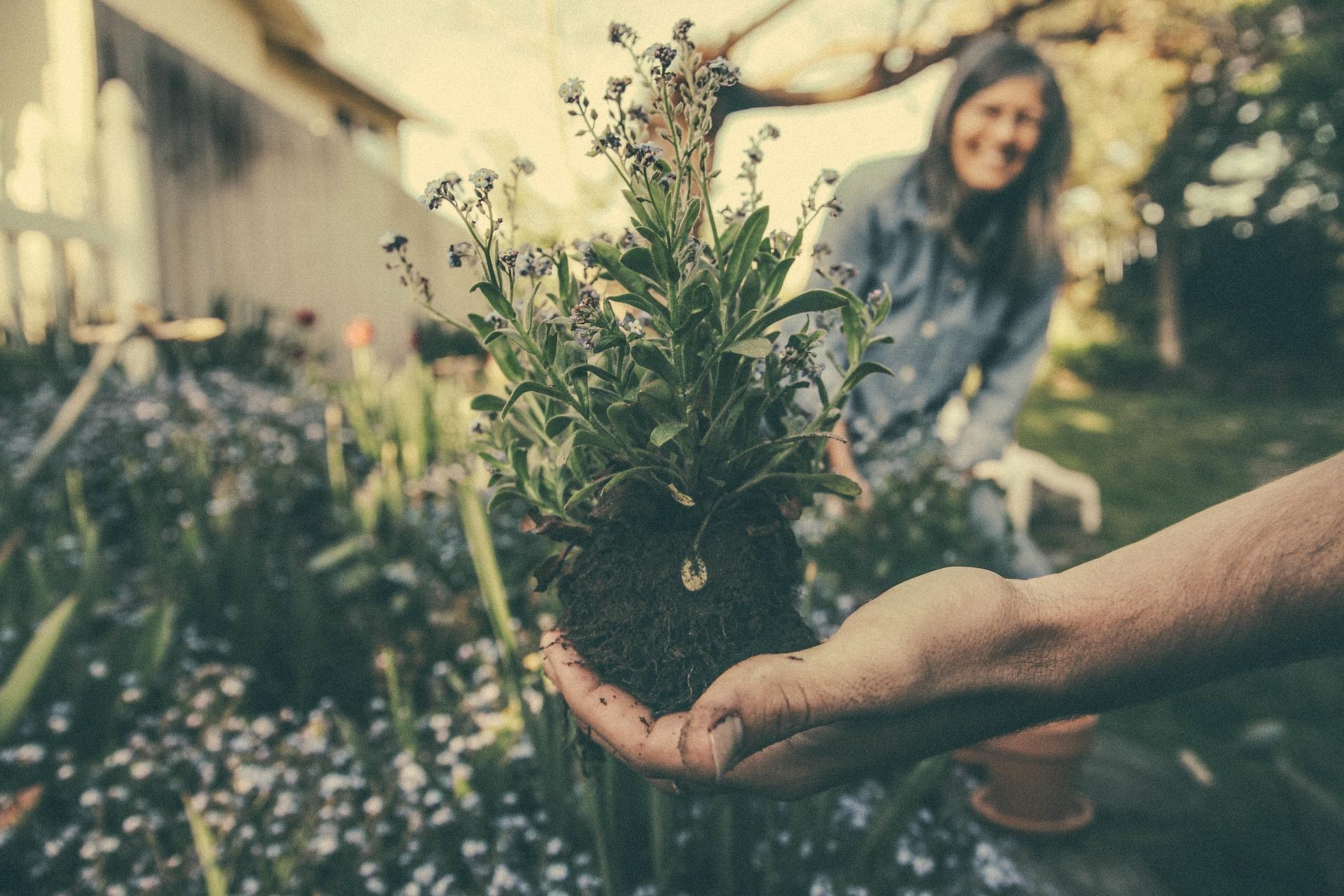 Geef je tuin een make over